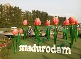 Normal_madurodam__tulpen