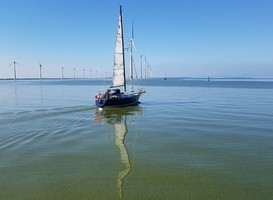 Normal_zeilboot__ijsselmeer__waterplanten