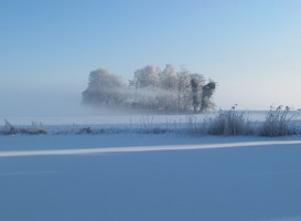 Normal_kou__winter__vorst